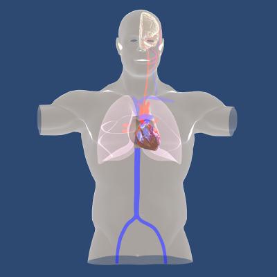 Epicardio Simulation Pro